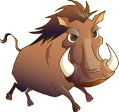 Horse Animal Tusk Wild Royalty Free Stock Photo