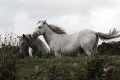 Horse, Animal, White, Grassland Royalty Free Stock Image