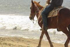 A Horse Walking Down the Beach stock image