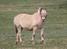 Horse. Another beautiful horse on a country drive Stock Photography