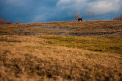 Horse in another perspective. This picture was took on a small hill near Ploiesti Royalty Free Stock Image