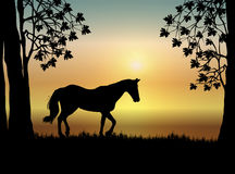 Horse ar Sunrise Royalty Free Stock Photography