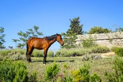 Horse on Srd hill Royalty Free Stock Photography