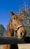 Horse At Rail Fence Royalty Free Stock Photo
