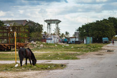 Horse attached to a post alone in Remedios Cuba. Royalty Free Stock Photo