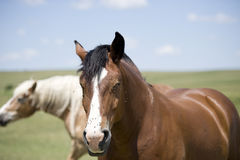 Horse attacked by flies. Face of horse beeing attacked by flies Stock Photos