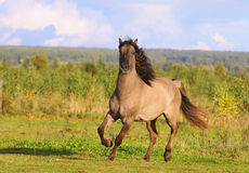 Horse in autumn Royalty Free Stock Photos