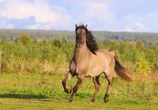 Horse in autumn Royalty Free Stock Photos