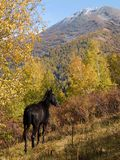 Horse by autumn Stock Photography