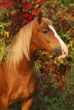 Horse on autumn background. Beautiful horse in the autumn garden royalty free stock photos