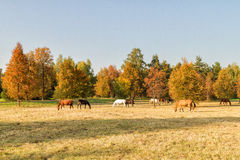 Horse autumn day Stock Photo