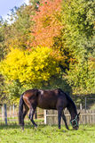 Horse and autumn forest Royalty Free Stock Photos