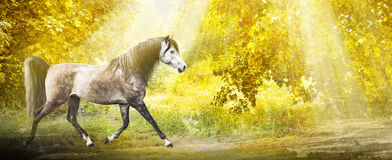 Horse on  autumn forest in sunlight, banner Royalty Free Stock Images