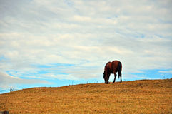 Horse on autumn hill Stock Photo