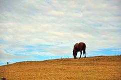 Horse on autumn hill Stock Photo
