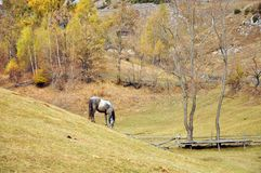 Horse on autumn hill Stock Photos