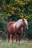 Horse in autumn meadows Royalty Free Stock Images
