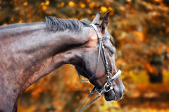 Horse in the autumn park. Chestnut horse in the autumn park Royalty Free Stock Photos