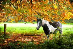 Horse in autumn. Portrait of horse in autumn view Stock Photography