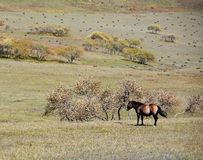 Horse  in autumn prairie Stock Photography