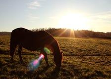 Autumn Grazing. Horse Autumn Scotland animals wildlife Royalty Free Stock Photo