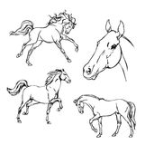 Horse. B & W vector drawing. Stock Photo