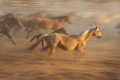 Horse baby and his mother in a fiery blurred motion. Stock Images