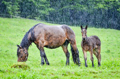 A horse and a baby horse Royalty Free Stock Photos