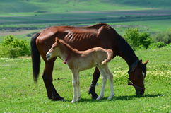 A horse with a baby Royalty Free Stock Photos