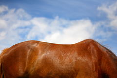 Horse Back Stock Images