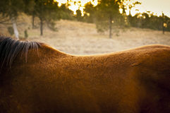 Horse Back Royalty Free Stock Photos