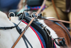 Horse back with reins in carriage Stock Image