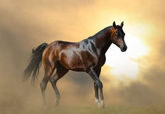 Horse back with reins in carriage Stock Photos