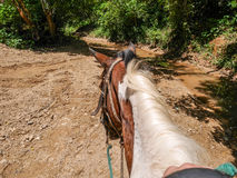 Horse back riding. Jungle and natural locations mud lakes and green flora Stock Photo