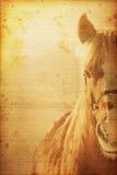 Horse Background. Beautiful horse on old nostalgic background used look Stock Photos