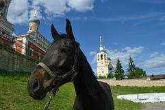 A horse on a background Elias Church Royalty Free Stock Photos