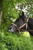 Horse on a background of foliage Stock Photography