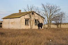 Horse on the background of house. The horse on the background of an abandoned house in a field Stock Photography