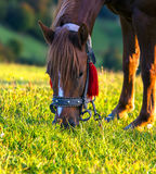 Horse on a background of mountain Royalty Free Stock Photo