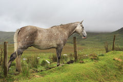 Horse on background of mountains in clouds. Stock Images