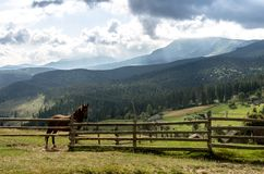 A horse in the background of the mountains. A horse in nature. A house horse Royalty Free Stock Photo