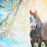 Horse on background of spring blossom nature and blue sky Royalty Free Stock Image