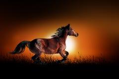 Horse on the background of sunset. Horse against on the background of african sunset Royalty Free Stock Image