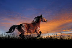 Horse on the background of sunset sky. Horse against on the background of sunset sky Royalty Free Stock Image