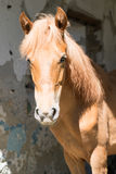 Horse on the background wall. Collapsed building Royalty Free Stock Images