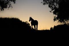 Horse backlight silhouette in sunset