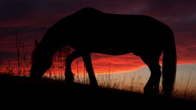 Horse Backlit Sunset. Grazing horse on a background of backlit quickly running evening clouds. Slow Motion & Time-lapse