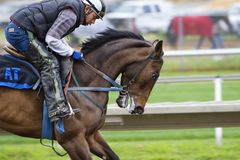 Horse Backriding Race Royalty Free Stock Images