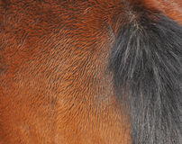 Horse backside texture Stock Photos