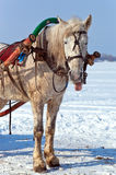 Horse at the bank of a frozen river Stock Photo